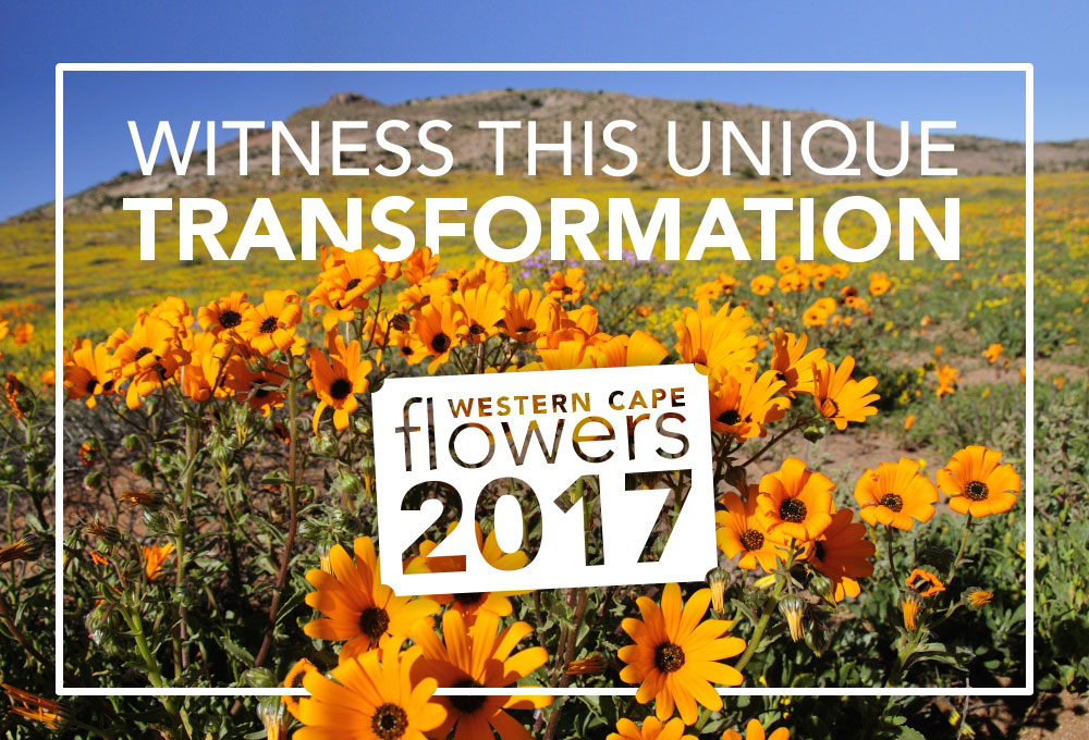Flower season 2017 Piekenierskloof